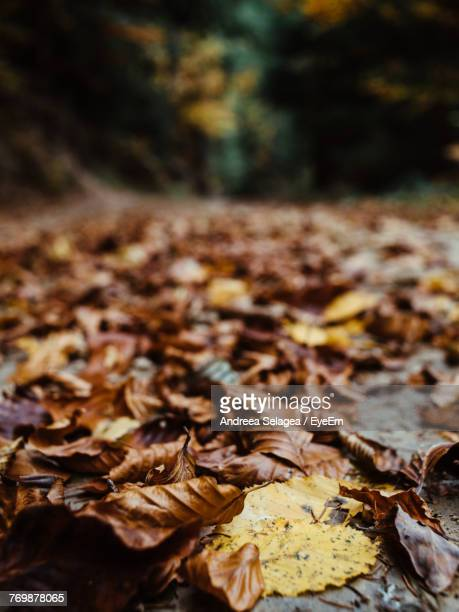 Fallen Leaves On Field In Forest During Autumn