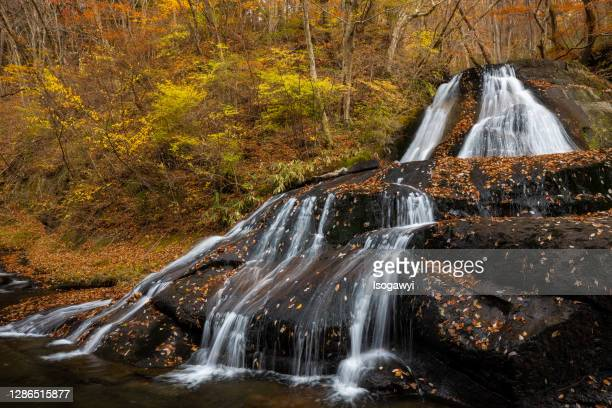 fallen leaves on waterfalls in late autumn - isogawyi stock pictures, royalty-free photos & images