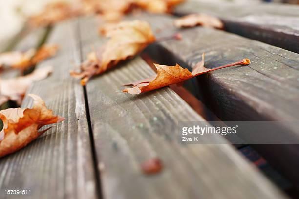 caído folhas - novembro imagens e fotografias de stock