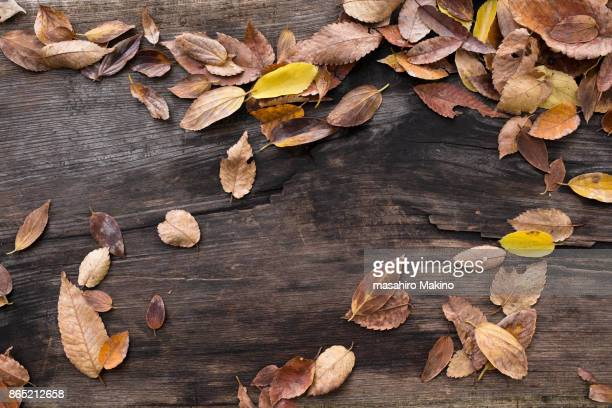 fallen leaves - dead plant stock pictures, royalty-free photos & images