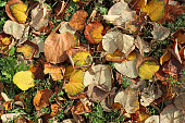 fallen leaves under tree autumn time