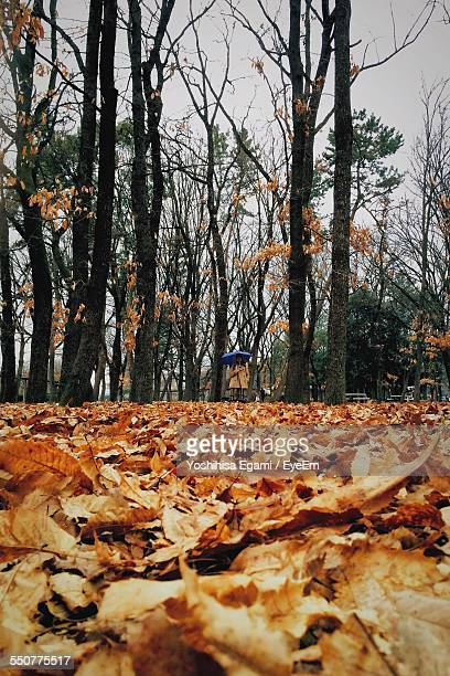 Fallen Leaves With Trees In Background