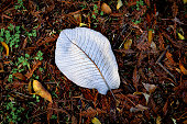 leaf with veins forest floor