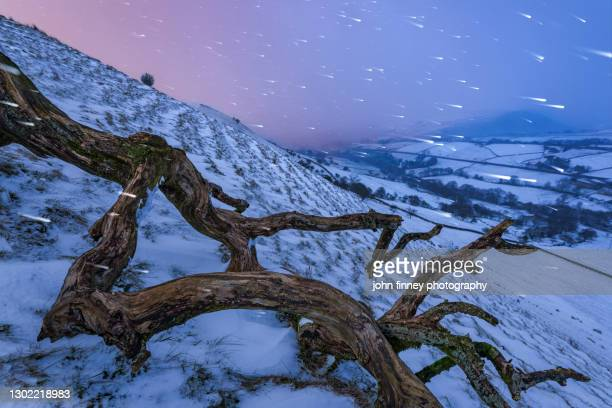 fallen old tree in a blizzard, peak district - uk - charming stock pictures, royalty-free photos & images