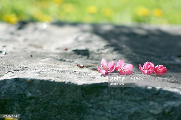fallen peach blossoms - peach blossom stock pictures, royalty-free photos & images