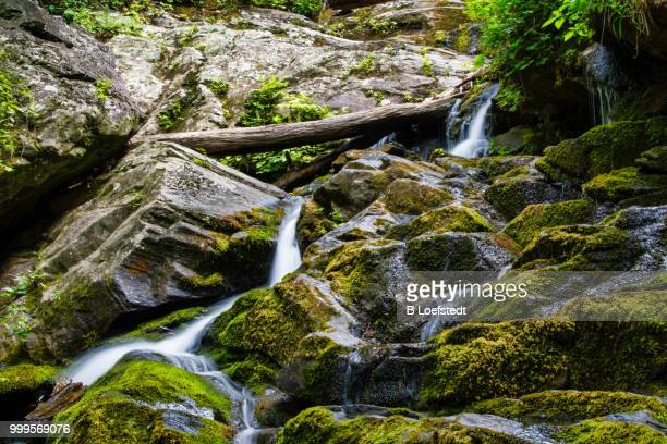 fallen - roaring fork motor nature trail stock pictures, royalty-free photos & images