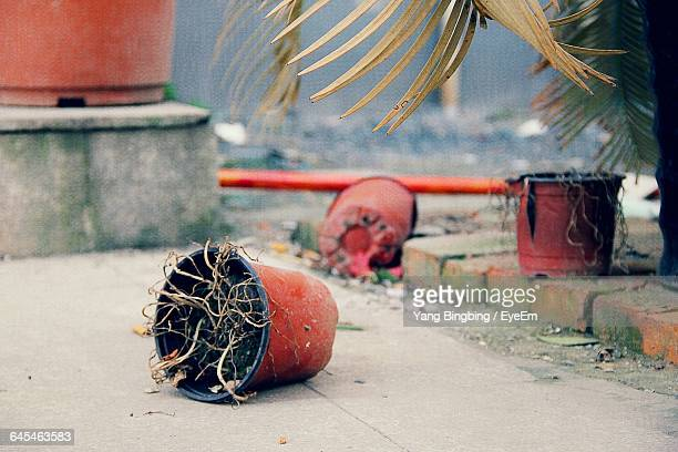 fallen potted plants in back yard - dead plant stock pictures, royalty-free photos & images