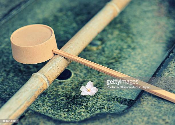 fallen sakura - bamboo dipper stock photos and pictures