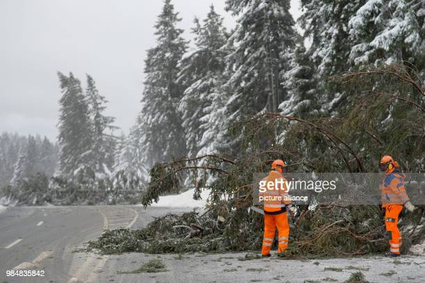 Fallen spruce lie on the federal road 4 in Upper Harz Germany 18 January 2018 Storm 'Friederike' moves over large parts of Germany Photo Swen...