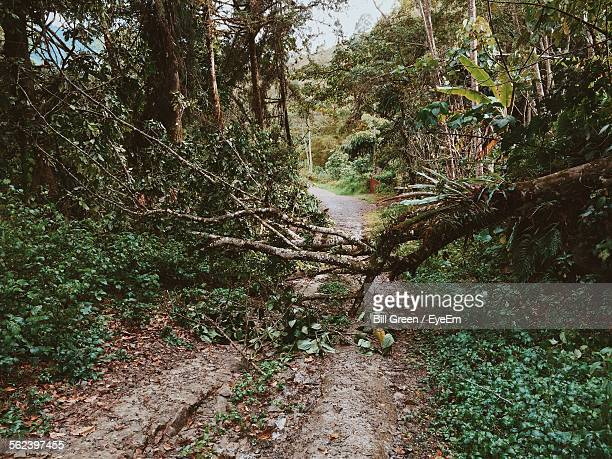 on a tree fallen across the Without further discussion to an inherent risk around trees two of the 45  incidents considered involved a tree or branch falling on a windless day and  striking a.