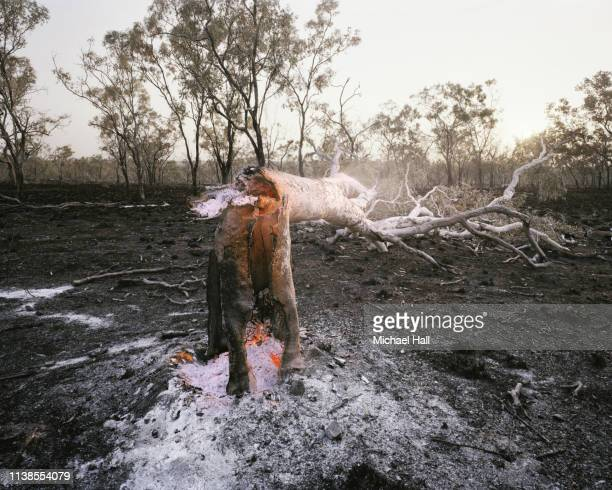 fallen tree after bush fire - australia fire stock pictures, royalty-free photos & images