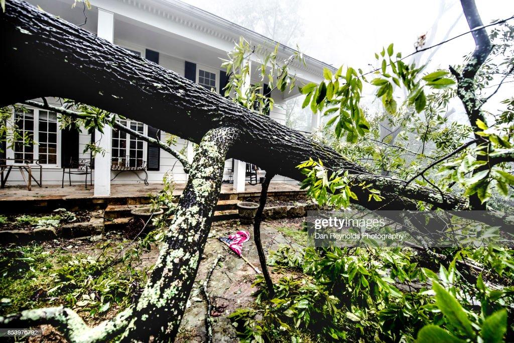Fallen Tree after storm : Stockfoto