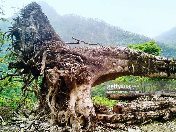 fallen tree against mountains - fallen tree stock pictures, royalty-free photos & images
