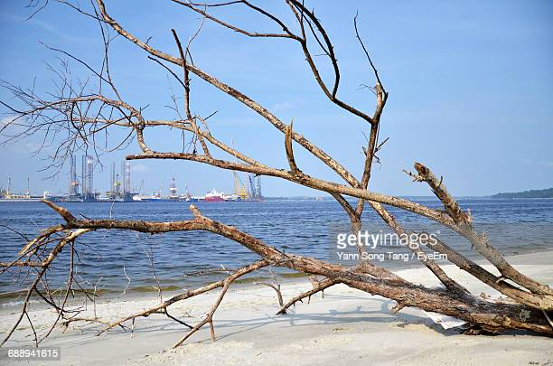 fallen tree at beach against blue sky - fallen tree stock pictures, royalty-free photos & images