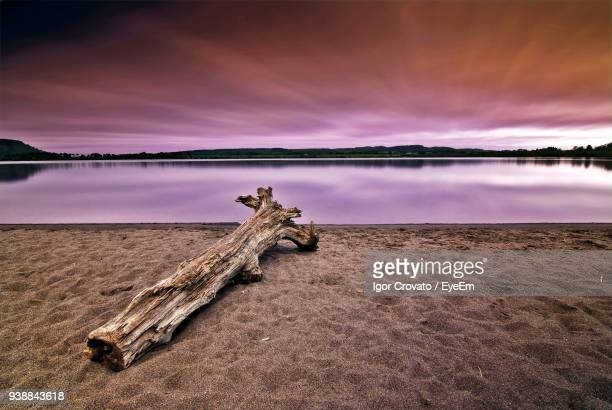 fallen tree at lake against sky during sunset - fallen tree stock pictures, royalty-free photos & images
