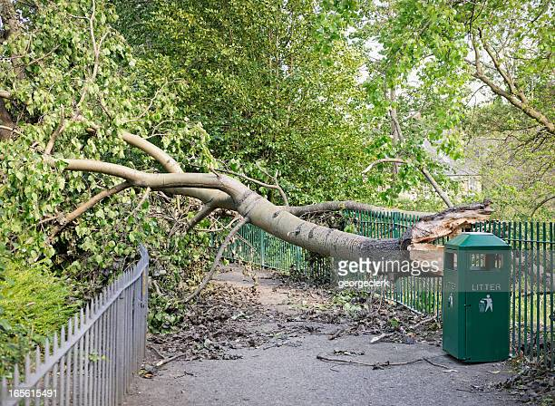 fallen tree blocking a path - fallen tree stock pictures, royalty-free photos & images