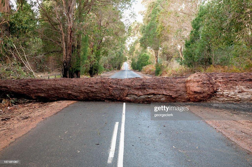 Fallen Tree Blocking Road : Stock Photo