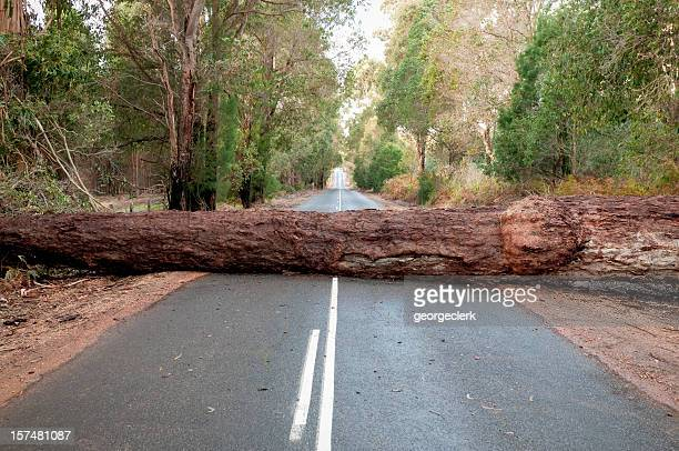 fallen tree blocking road - obstacle course stock photos and pictures