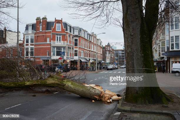 A fallen tree blocks the road as a hurricaneforce storm blows galewind up to force 12 on January 18 2018 in The Hague Netherlands The Dutch...