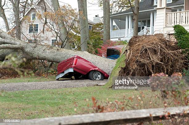 fallen tree demolished a red truck during hurricane sandy - gale stock photos and pictures