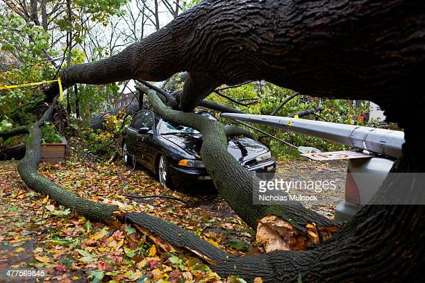 Fallen tree, fallen lamp post, crushed cars, hurricane sandy, new york city, fall leaves, fall leafs, dark, damaged, totaled, disarray, caution tape