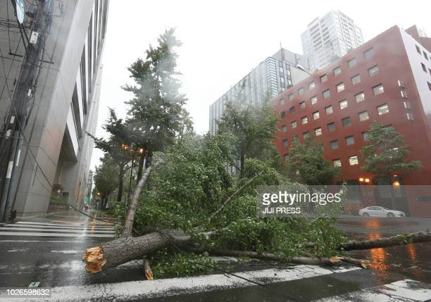 A fallen tree from strong winds lies on Midosuji street in central Osaka on September 4 as Typhoon Jebi made landfall around midday in southwestern...