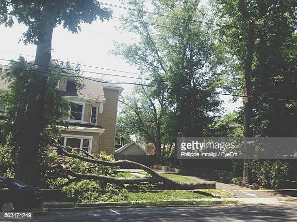 fallen tree in backyard - fallen tree stock pictures, royalty-free photos & images