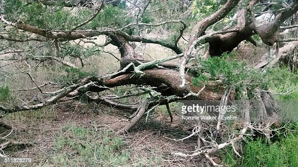 fallen tree in meadow - meadow walker stock pictures, royalty-free photos & images