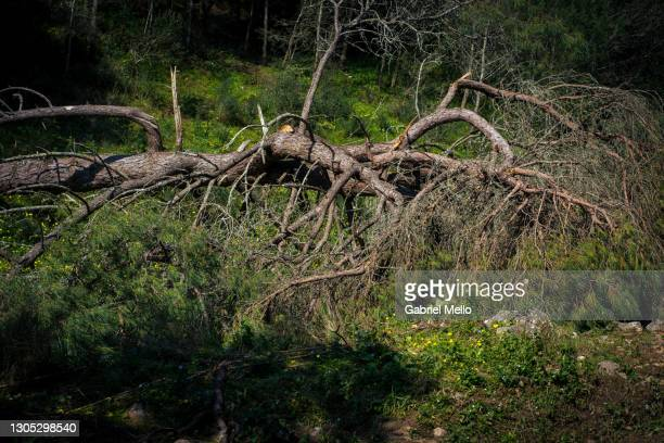 a fallen tree in the forest - death stock pictures, royalty-free photos & images
