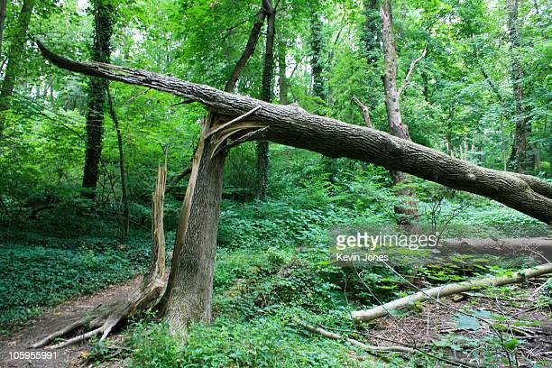 fallen tree in woodland - fallen tree stock pictures, royalty-free photos & images