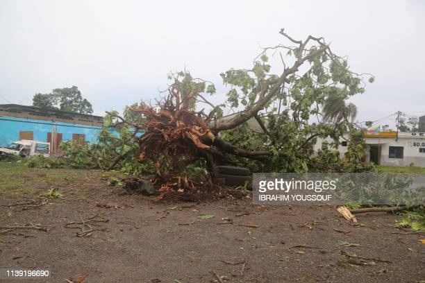Fallen tree is pictured on April 25, 2019 in Moroni after tropical storm Kenneth hit Comoros before heading to recently cyclone-ravaged Mozambique. -...