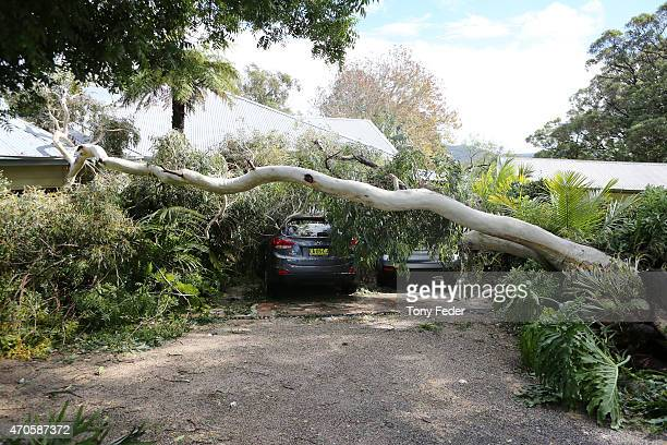 A fallen tree lies across a house at avoca Beach on the Cntral Coast on April 22 2015 in Sydney Australia Three people have died and more than 200000...