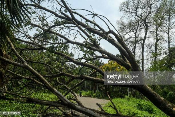 A fallen tree lies across an alley following the landfall of cyclone Amphan at the Indian Botanical Garden in Kolkata on May 24 2020 One of Asia's...