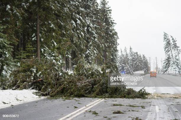 A fallen tree lies on a road near Torfhaus northern Germany on January 18 as a heavy storm lashed part of the country with hurricaneforce winds / AFP...