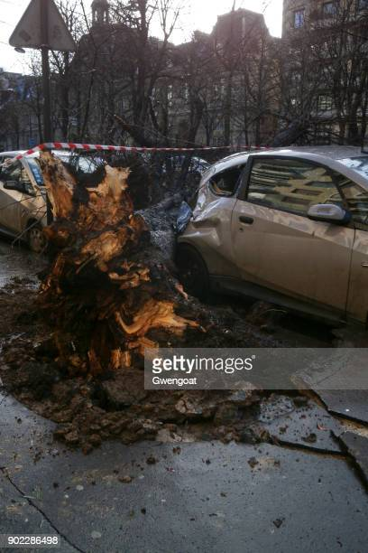fallen tree on an electric car - green car crash stock photos and pictures