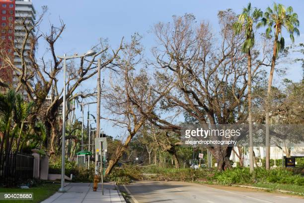 fallen tree on brickell avenue - miami dade county stock photos and pictures