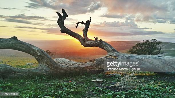 fallen tree on field against sky during sunset - fallen tree stock pictures, royalty-free photos & images
