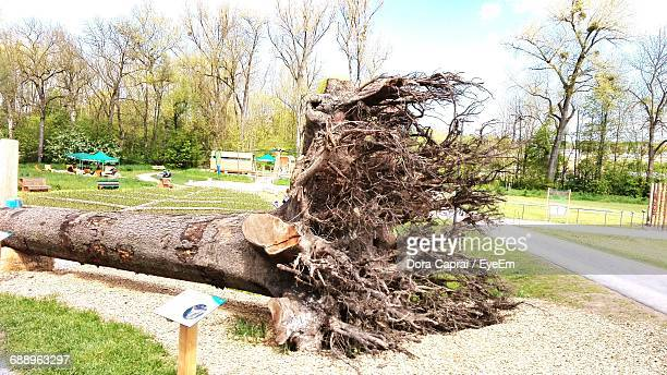fallen tree on field at park - fallen tree stock pictures, royalty-free photos & images