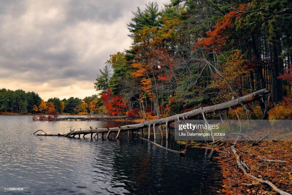 Fallen Tree : Stock Photo