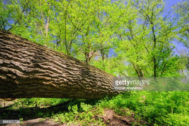 fallen tree - fallen tree stock pictures, royalty-free photos & images