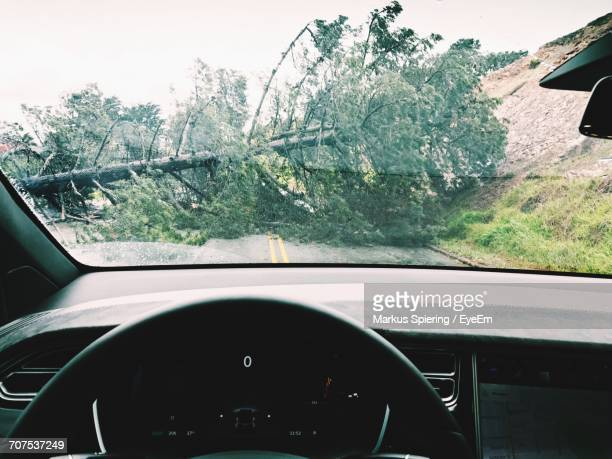 fallen tree seen through windshield of car - fallen tree stock pictures, royalty-free photos & images