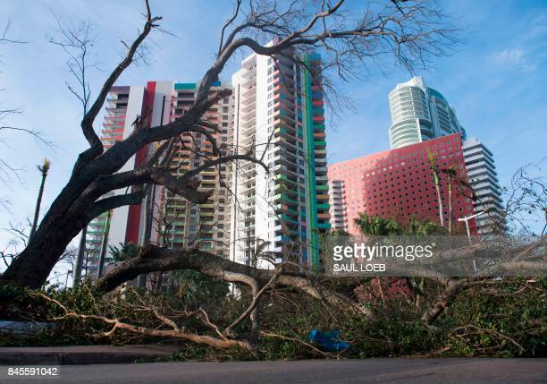 TOPSHOT A fallen tree toppled by Hurricane Irma blocks a street in downtown Miami Florida on September 11 2017