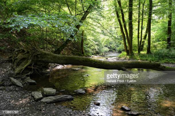 Fallen Tree Trunk Over River In Forest