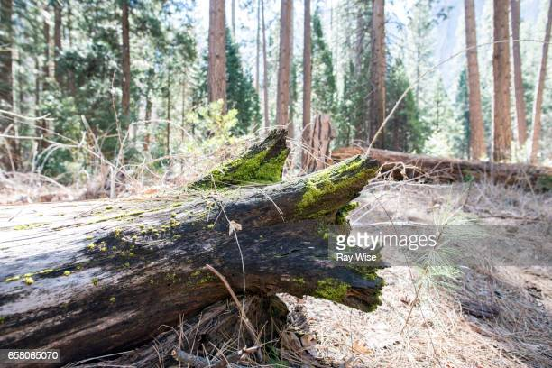 fallen tree with moss - fallen tree stock pictures, royalty-free photos & images