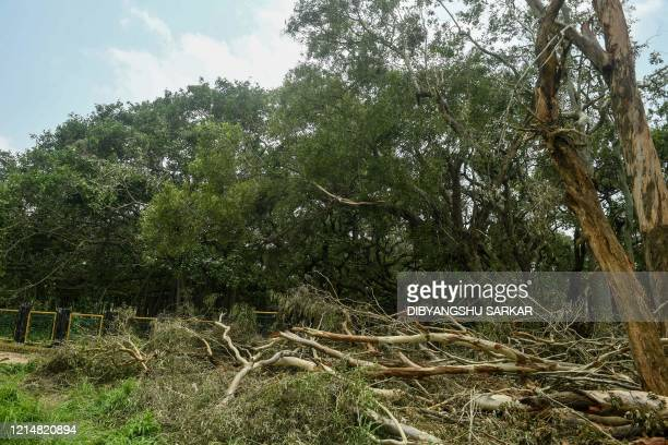 Fallen trees are seen following the landfall of cyclone Amphan at the Indian Botanical Garden in Kolkata on May 24 2020 One of Asia's oldest botanic...