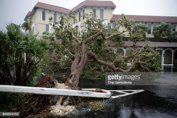 Fallen trees blocks a parking lot along North Federal Highway 1 as tropical storm strength winds produced by Hurricane Irma slam into the southern...