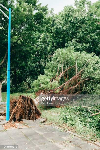 fallen trees destroyed by the typhoon in city - geruïneerd stockfoto's en -beelden