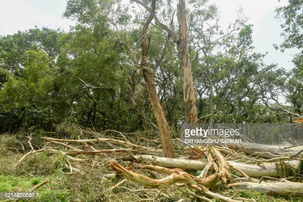 Fallen trees lie on the ground following the landfall of cyclone Amphan at the Indian Botanical Gardenin Kolkata on May 24 2020 One of Asia's oldest...