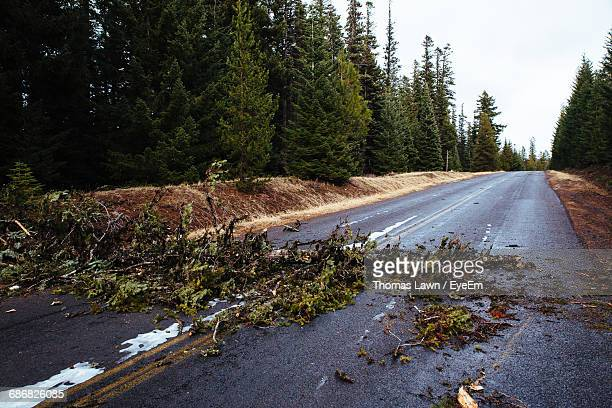 fallen trees on empty road - fallen tree stock pictures, royalty-free photos & images