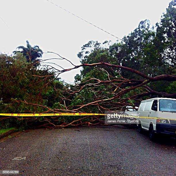 Fallen Trees Over Cars On Street During Storm